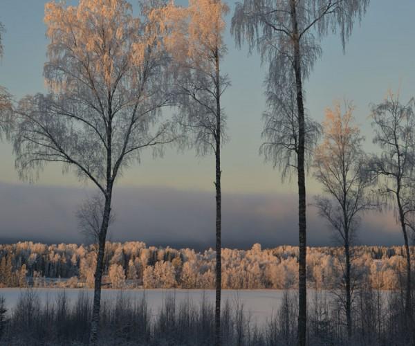 kalte Morgenstimmung