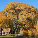 Der Herbst ist voll im Gange - höst fullt på gång