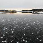 Ja, ja, unser See ist zugefroren - spiegelglatt